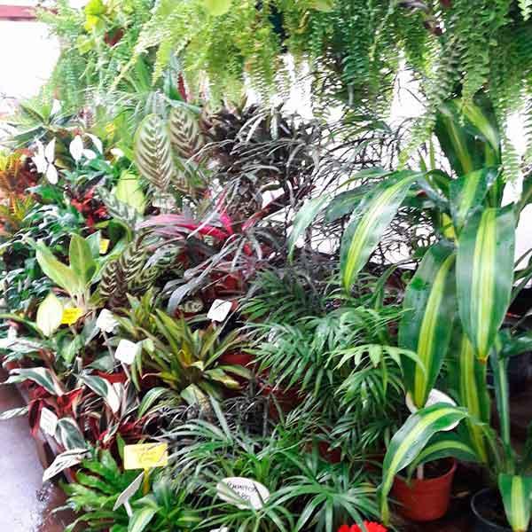 Vivero isla verde todo para tu jard n for Vivero tu jardin
