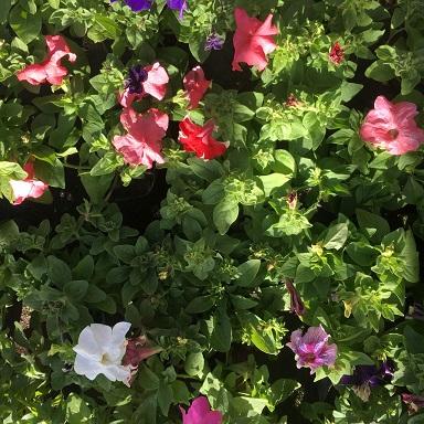 Plantines primavera verano