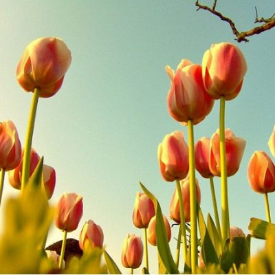Plantas de bulbos